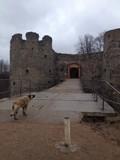 Древняя Копорская крепость, не подвергалась реставрации. Историческое укрепление средневековья.