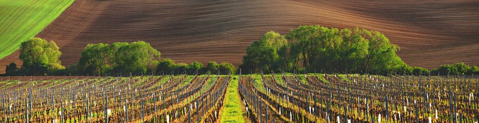 Fototapeta francuska winnica