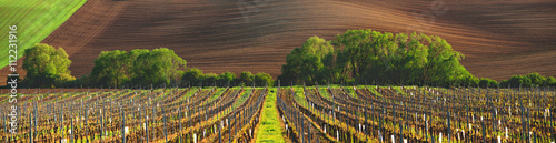Deurstickers Wijngaard France vineyard in the evening