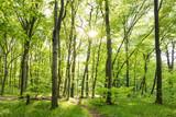 Rano w słonecznym lesie