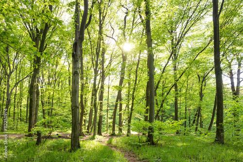 obraz PCV Morning in sunny forest