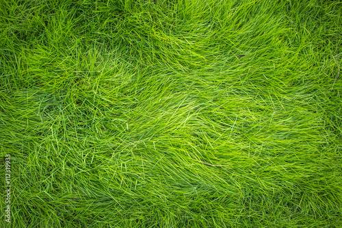 Green grass, Grass top view