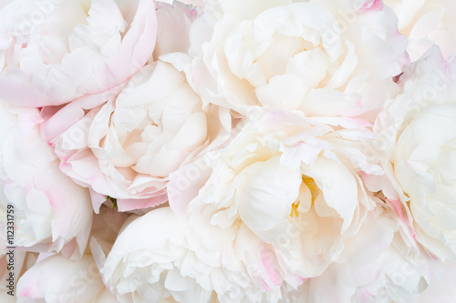 Beautiful floral background - 112331759