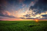 Green wheat field, sunset shot