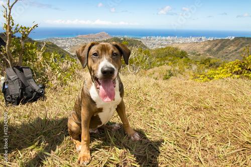 Happy Hound Dog in Honolulu Hawaii Poster