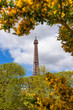 Eiffel Tower through a spring yellow flowers bushes in Paris France