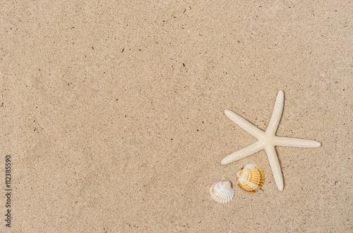 Sand Strand mit Seestern und Muscheln