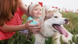 Mother and her little daughter playing with siberian husky dog in poppy field, slow motion