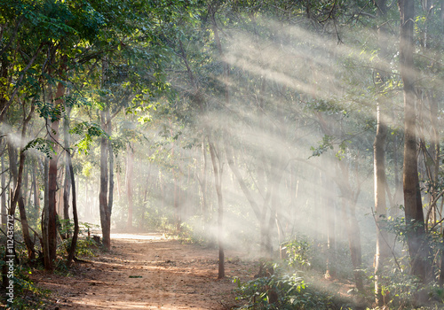 Sunlight in forest with fog - 112436712