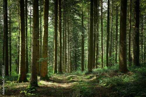 un chemin dans la forêt - 112488537