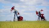 The oil pump in a rye field