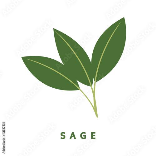 sage herb, food vector illustration, isolated logo
