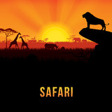 Vector illustration of Africa landscape with African lion standing on rock and sunset background. .Safari theme. - 112539904