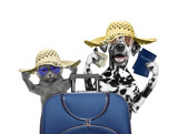 Cat and dog are going on a trip to travel - 112568332