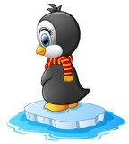 little penguin on a bit of ice