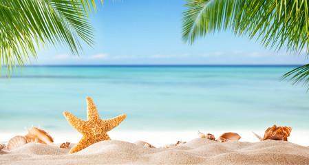 Fototapeta tropikalna plaża z muszlami w pisaku