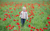 child, boy, kid, walks in a tulip field