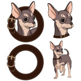Set of color illustrations with Chihuahua in a collar. Vector isolated objects.