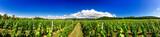 Tuscany vineyards, Italy
