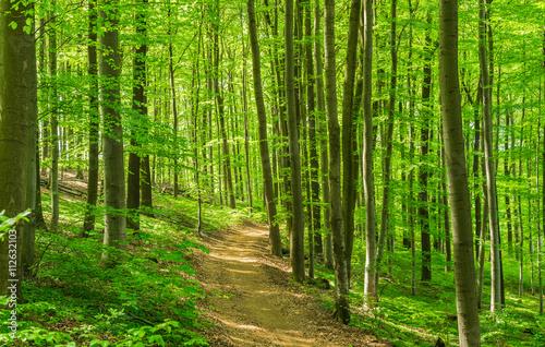 obraz lub plakat Wald Weg Wanderung Freizeit Erholung