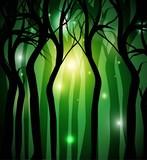 foresta nera misteriosa con luci sullo sfondo