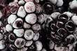 Frozen Blackberries Macro