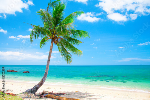 Poster, Tablou tropical beach with coconut palm
