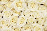 roses - 112709157