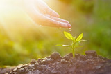 Hand nurturing and watering young plant in sunshine nature background - 112715563