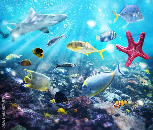 Zdjęcia na płótnie, fototapety na wymiar, obrazy na ścianę : Marine life