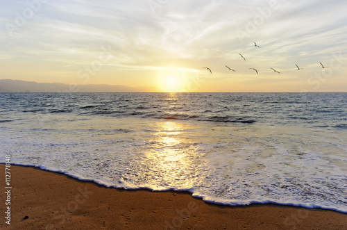 Poster Ocean Sunset Birds