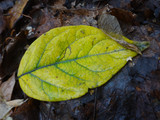 Beautiful leaf of tree in autumn day