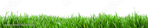 Foto op Canvas Gras Grass in high definition isolated on a white background