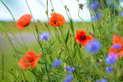 Zdjęcia na płótnie, fototapety na wymiar, obrazy na ścianę : Poppy and cornflowers on a summer meadow