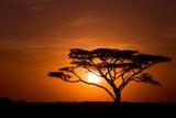Drzewo akacji przed wschodem słońca w Serengeti w Tanzanii
