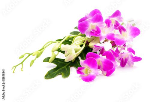 Papiers peints Azalea Orchid flower head bouquet isolated on white background