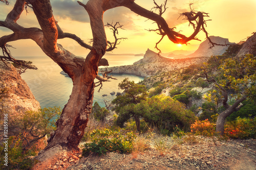 Landscape with beautiful view on mountain valley and old tree, blue sky and sea at sunrise