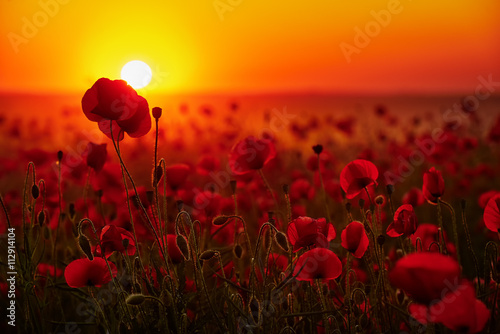 Kwiaty maków na tle zachodzącego słońca