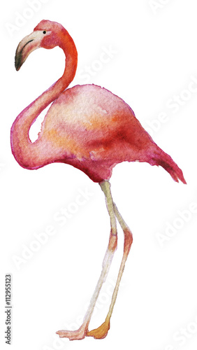 watercolor sketch of flamingo on a white background
