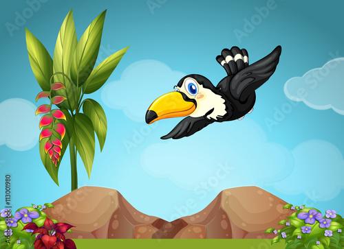 latajacy-tukan-w-ogrodzie,-bajki,-rysunek,-zwietrzeta