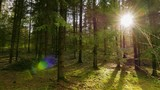 panorama spring forest and the sun