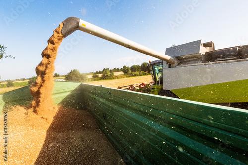Leinwanddruck Bild Getreidefeld mit Weizen bei der Ernte