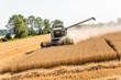 Getreidefeld mit Weizen bei der Ernte - 113139318