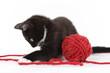 chaton noir et blanc jouant avec pelote de laine rouge - 113150165