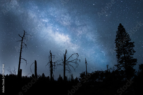 Milky Way Galaxy with Trees in Forrest