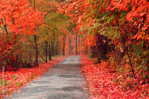 color autumn forest - 113240960