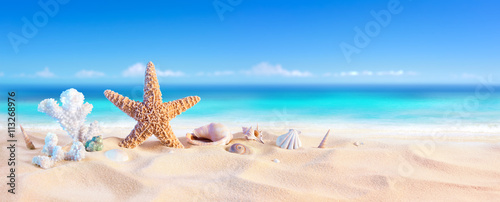 Golden Sand With Seashell And Starfish - Tropical Seashore