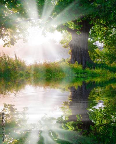 drzewo-w-lace-w-mgle-z-swiatlem-slonecznym-odbijal-na-rzece