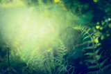 Fern leaves on dark  jungle or rainforest nature background, outdoor - 113290181