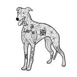 Greyhound Dog Doodle
